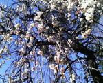 image/2011-02-22T11:30:50-1.jpg